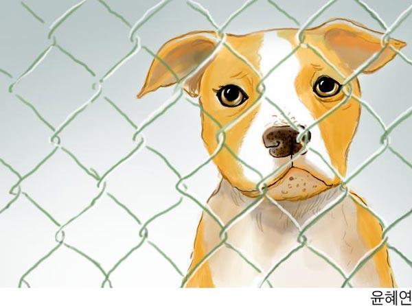 [이슈토론] 반려동물 포기 합법화