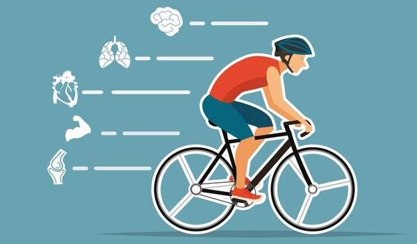 [나해란의 뇌과학 교실] 자전거 타는 법 잊지 않는 이유?… 뇌 깊숙이 저장하기 때문