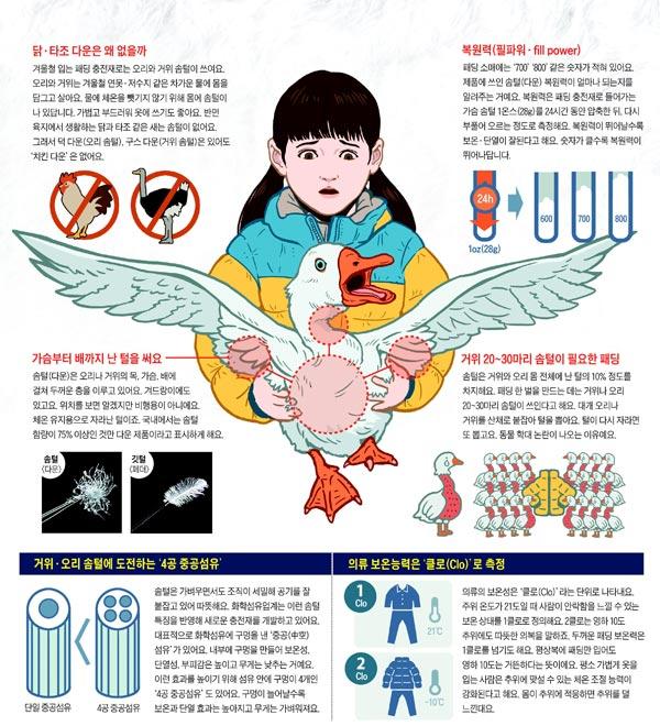 [재미있는 과학] 패딩, 왜 닭털은 안 쓰고 오리·거위털만 찾을까요?