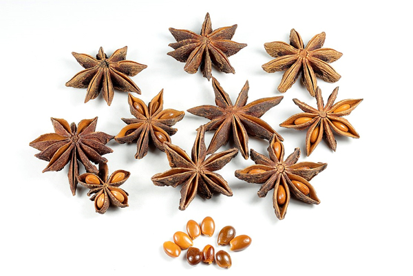 중국에서 향신료로 쓰이는 식물인 팔각회향. 팔각회향의 추출물은 바이러스가 세포 밖으로 퍼져나가는 것을 막아 독감 항바이러스제인 '타미플루'의 주된 성분으로 쓰입니다.